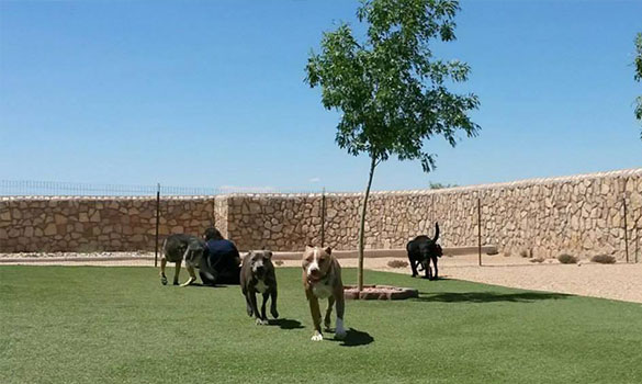 Dog Daycare El Paso TX