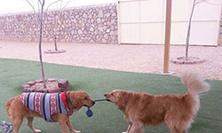 Dog Training El Paso TX